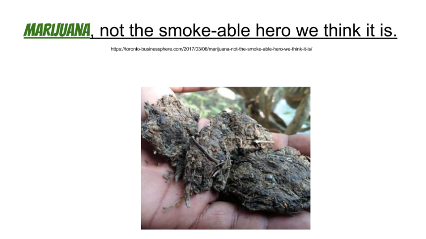 Marijuana, not the smoke-able hero we think it is. (1).png
